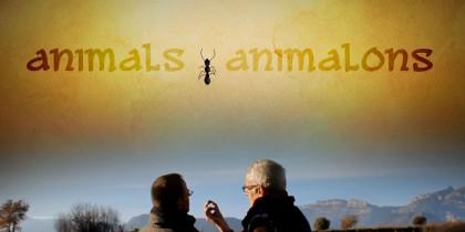 Animals i animalons